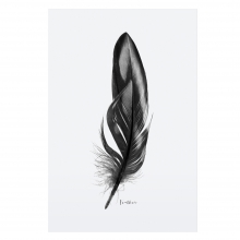 """POSTER """"FEATHER"""""""