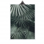 "POSTER ""PALM LEAF COLOURED"""