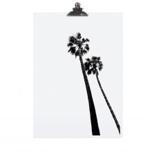 """POSTER """"PALM TREE"""""""